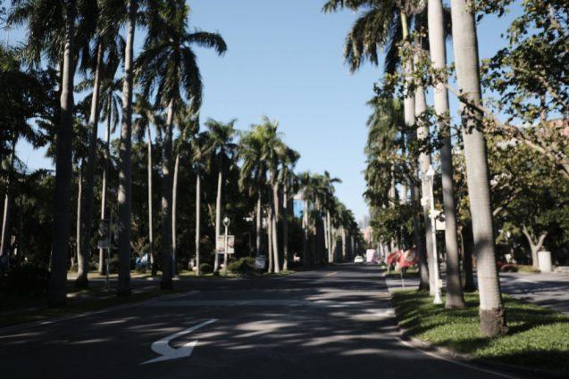 国立台湾大学のキャンバス。広大な敷地にヤシの植栽が規則正しく植栽されていて気持ちの良い環境です